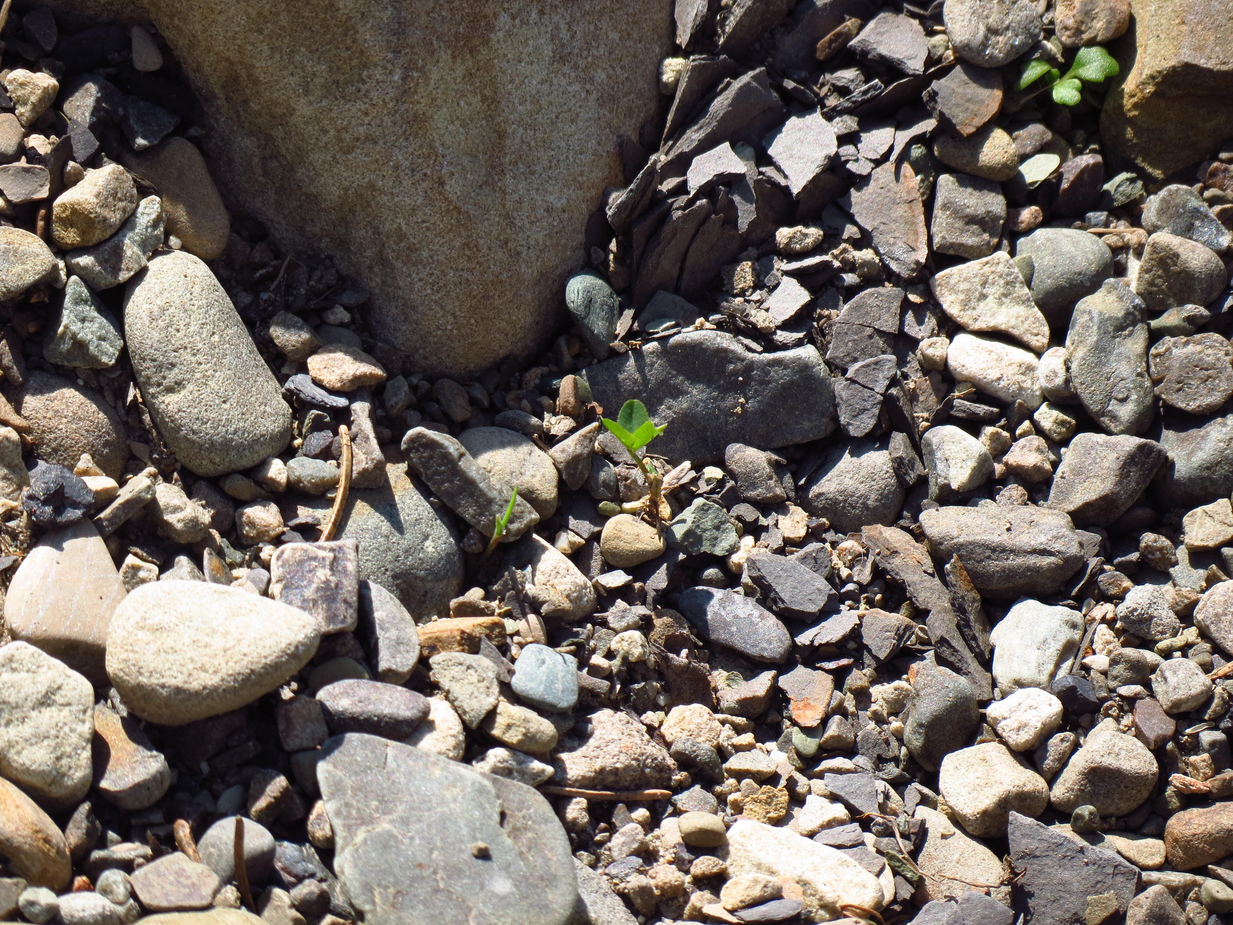 21617 скачать обои Растения, Пейзаж, Трава, Камни - заставки и картинки бесплатно