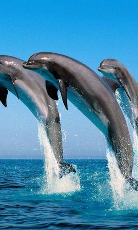 34389 baixar papel de parede Animais, Golfinhos - protetores de tela e imagens gratuitamente