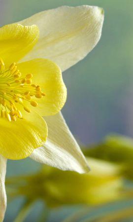 14433 скачать обои Растения, Цветы - заставки и картинки бесплатно