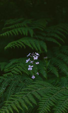 126912 descargar fondo de pantalla Flores, Helecho, Hojas, Plantas: protectores de pantalla e imágenes gratis