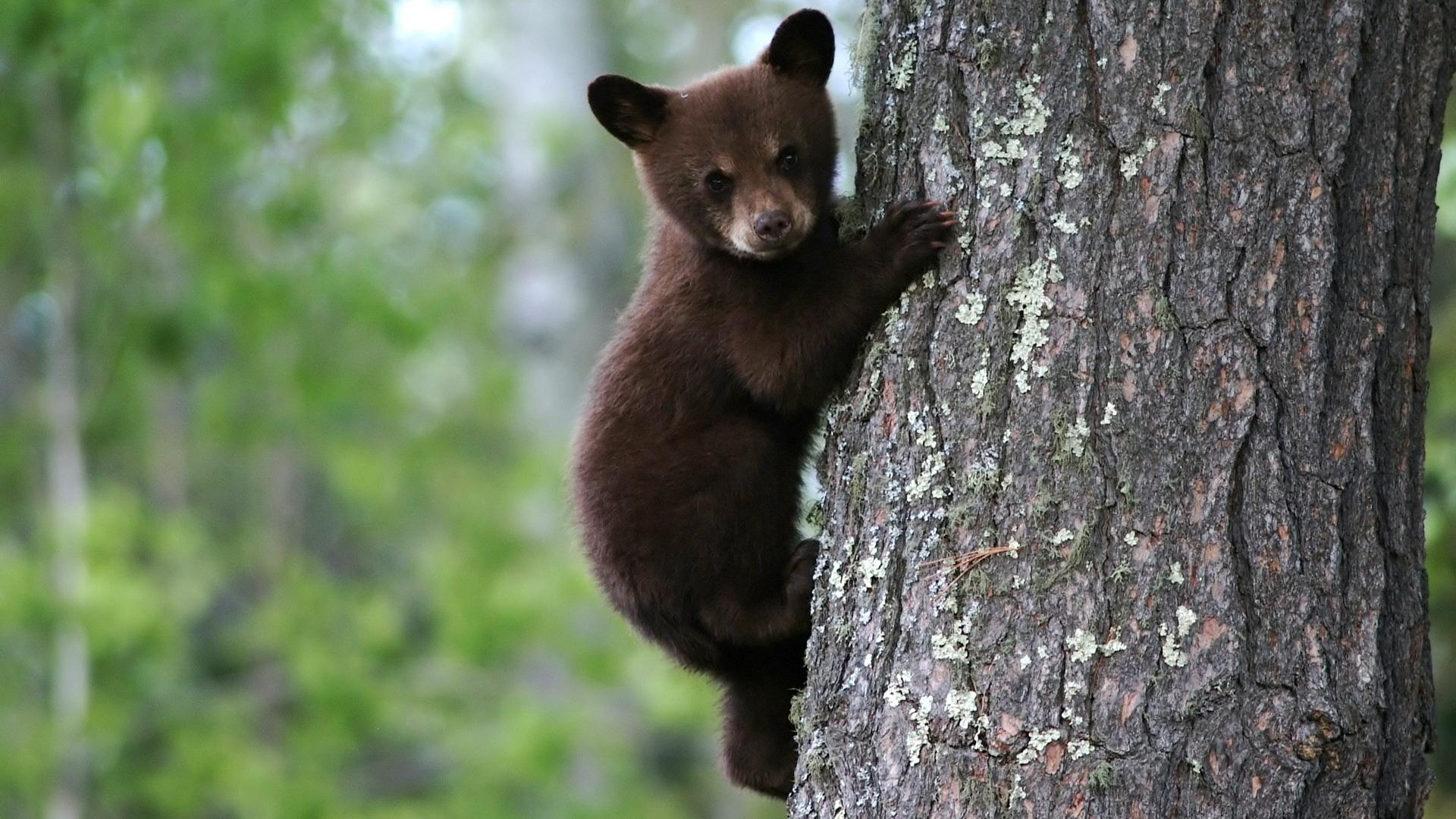 40907 Заставки и Обои Медведи на телефон. Скачать Медведи, Животные картинки бесплатно