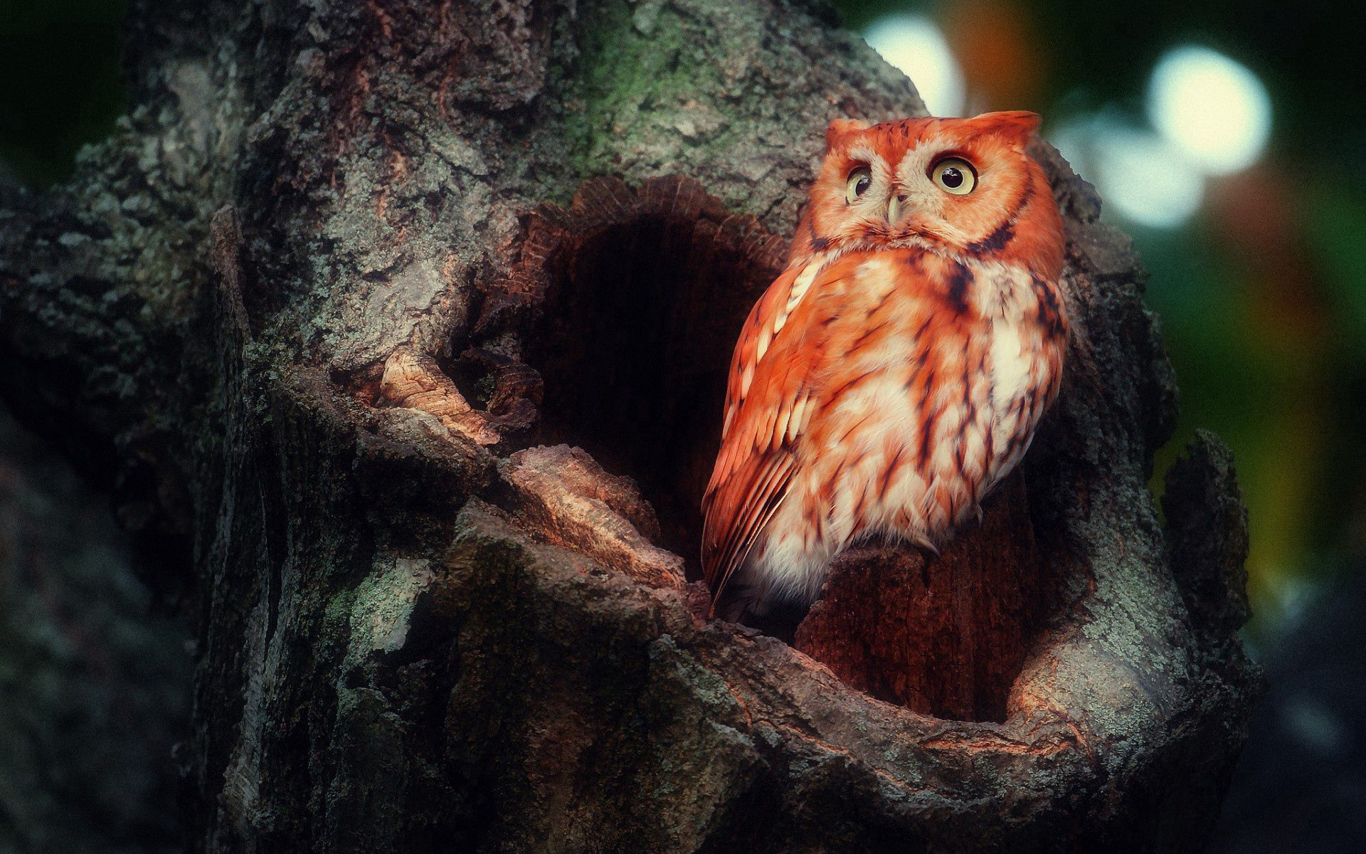 135407 download wallpaper Animals, Owl, Redhead, Sight, Opinion, Surprise, Wood, Tree, Hollow, Birds screensavers and pictures for free