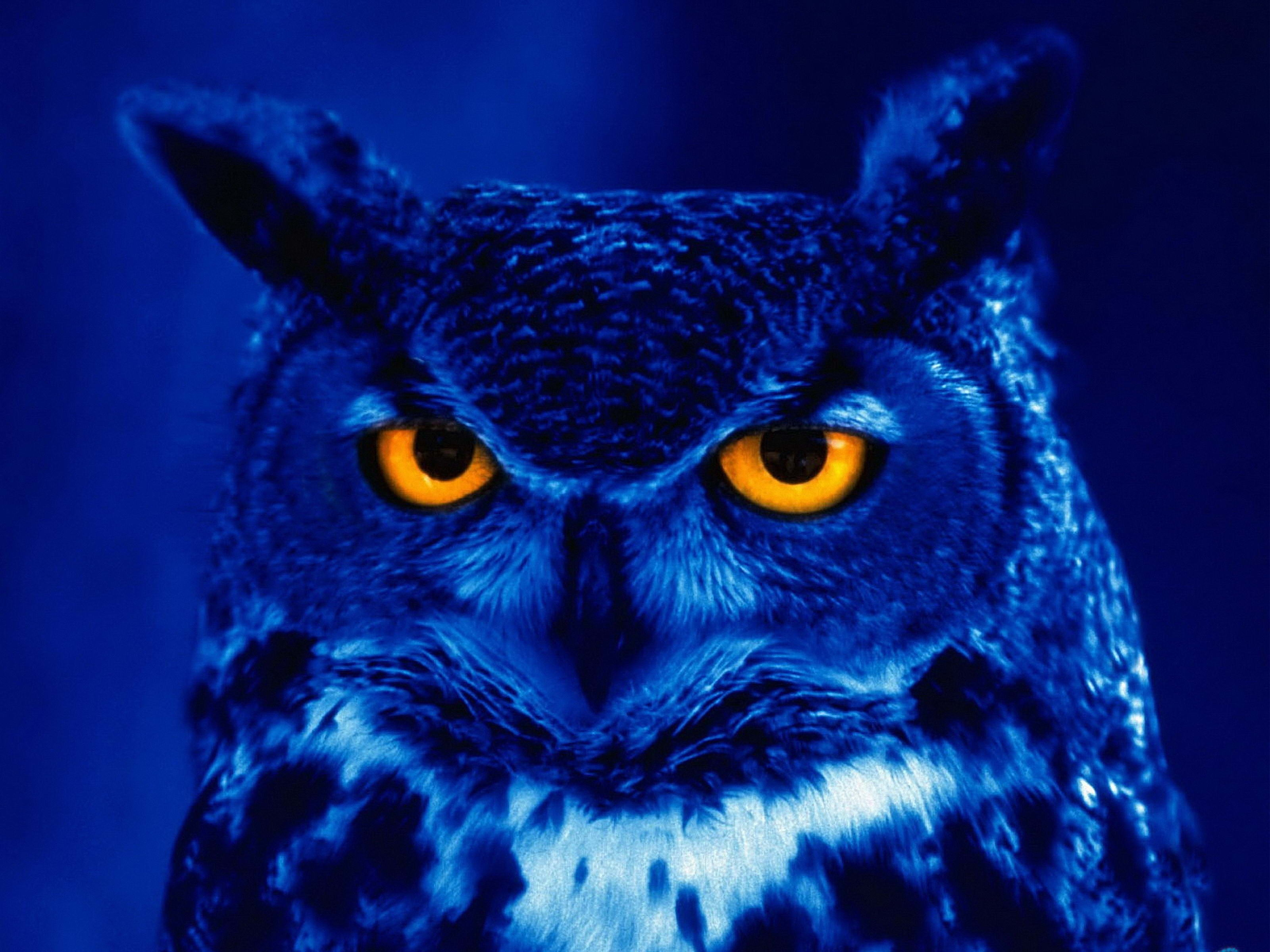 88539 скачать обои Хищник, Сова, Птица, Животные, Ночь, Жёлтые Глаза - заставки и картинки бесплатно