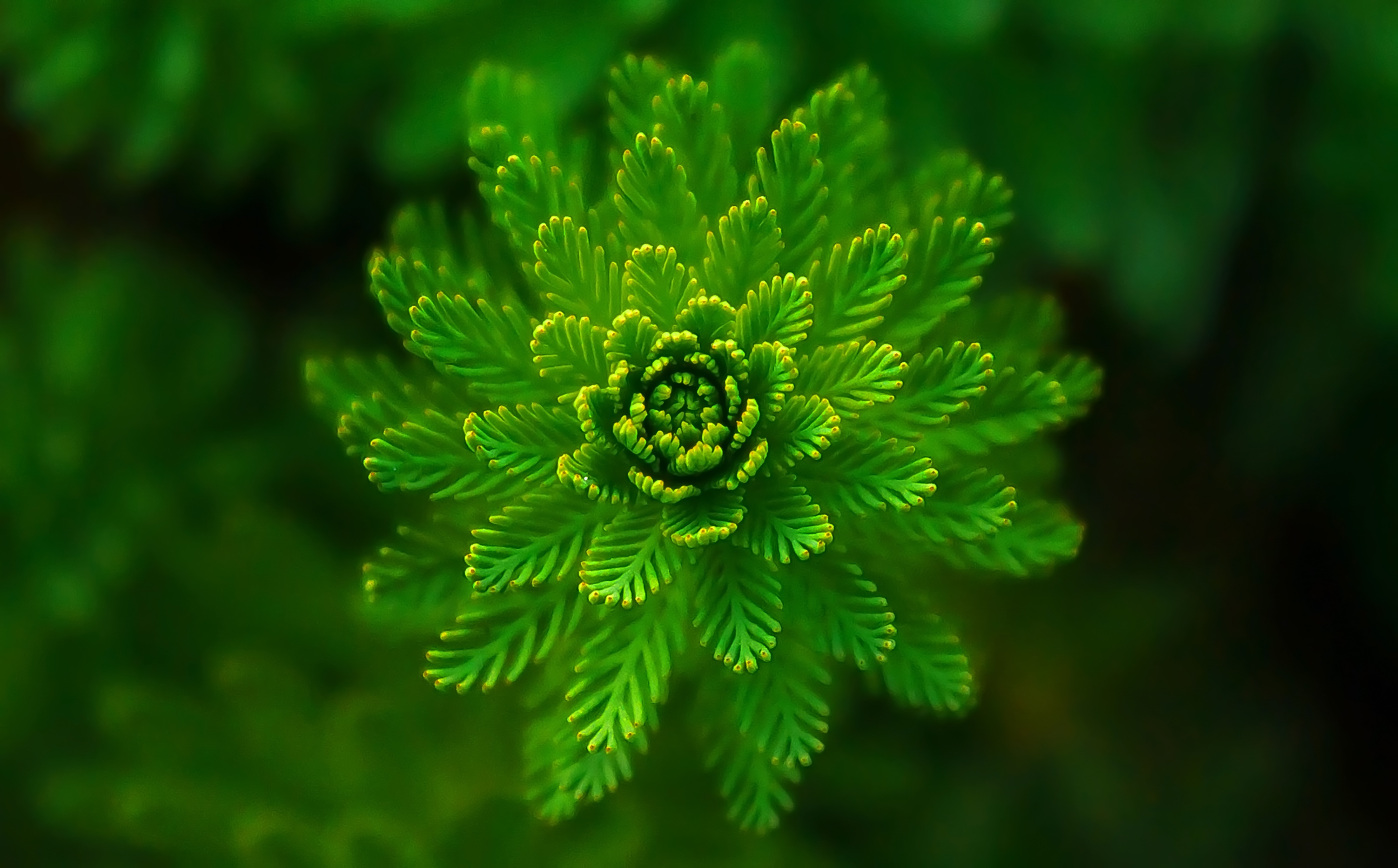 92456 Screensavers and Wallpapers Macro for phone. Download Plant, Macro, Close-Up, Seaweed, Algae pictures for free