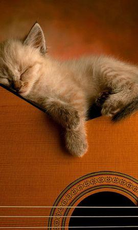 56602壁紙のダウンロード動物, キティ, 子猫, ギター, 横になります, 嘘, 睡眠, 夢-スクリーンセーバーと写真を無料で