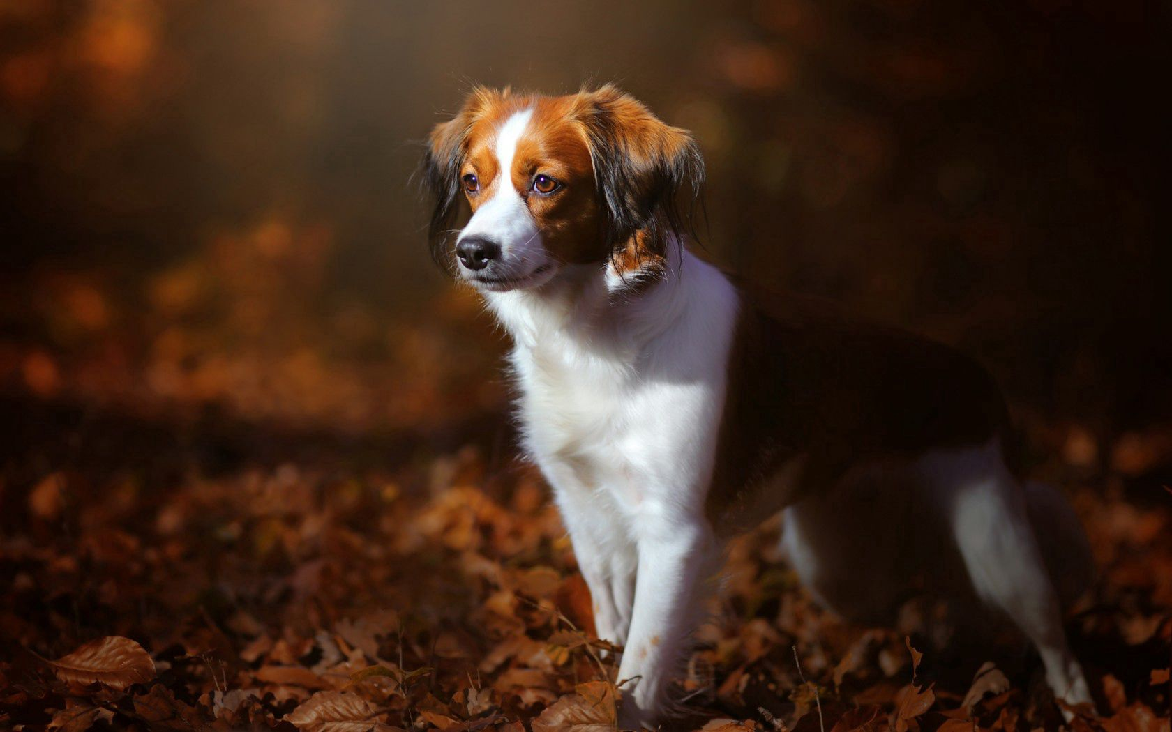 109466 Screensavers and Wallpapers Puppy for phone. Download Animals, Autumn, Dog, Puppy, Foliage pictures for free