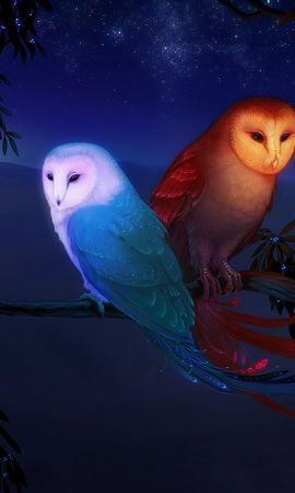 19082 download wallpaper Animals, Night, Owl, Pictures screensavers and pictures for free