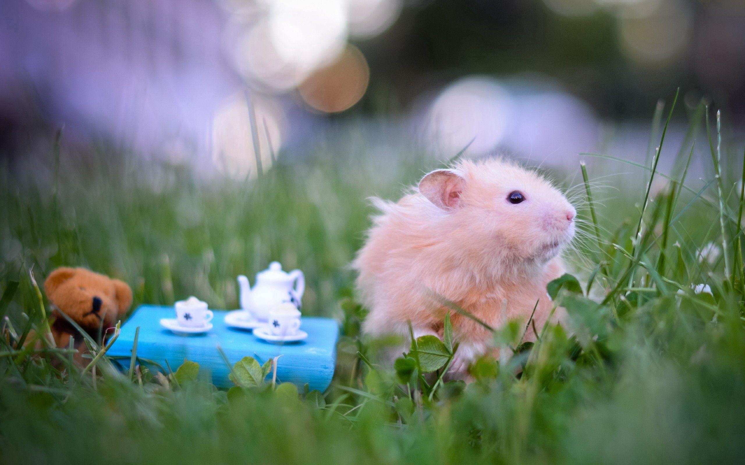 59822 Hintergrundbild herunterladen Tiere, Grass, Hamster, Spielzeug, Flauschige - Bildschirmschoner und Bilder kostenlos