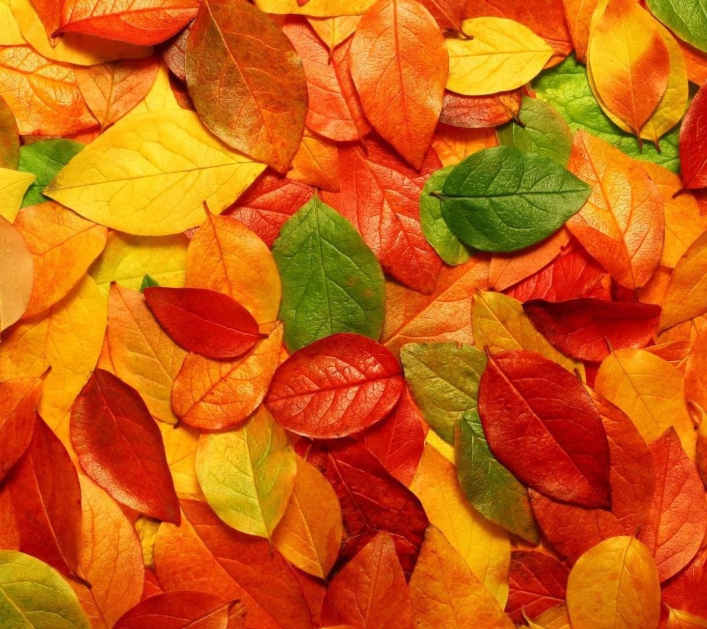 20737 скачать обои Фон, Осень, Листья - заставки и картинки бесплатно