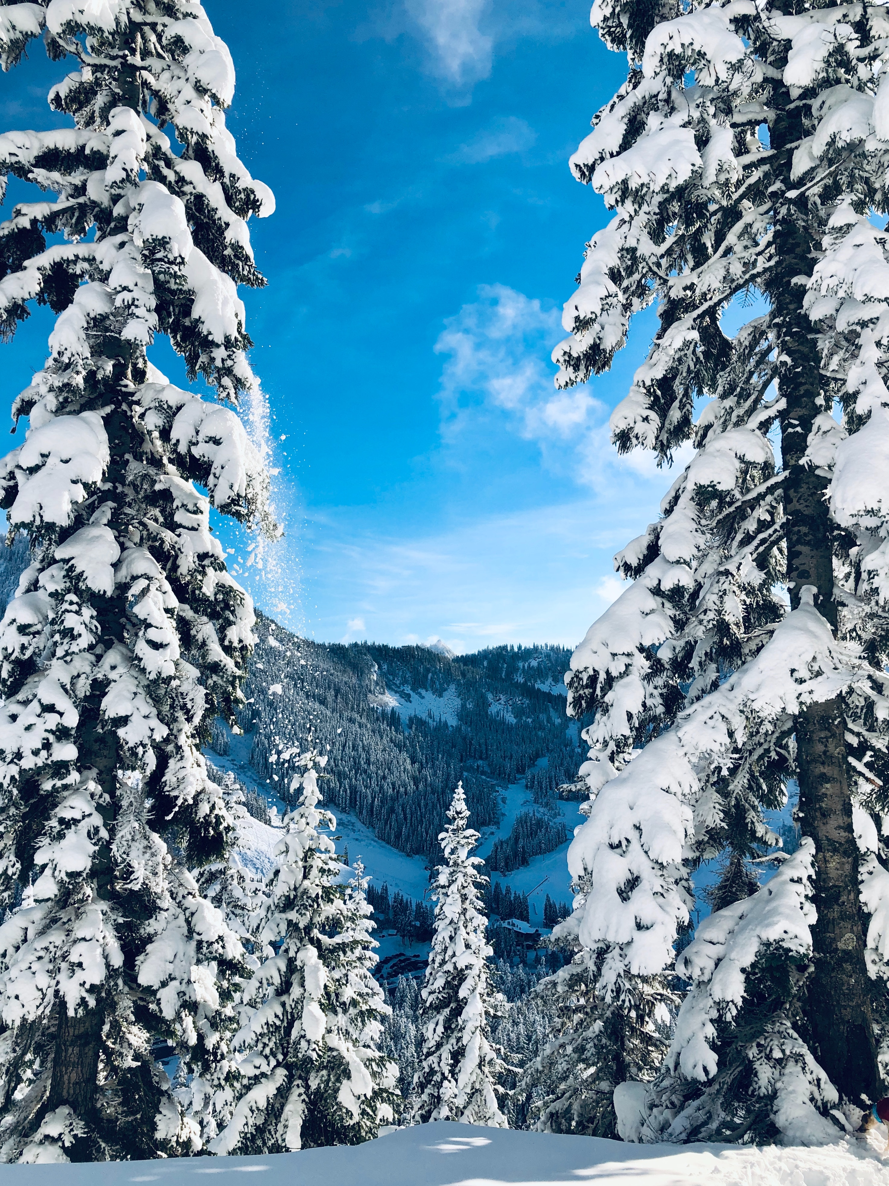 88701 скачать обои Природа, Зима, Снег, Деревья, Заснеженный, Пейзаж, Елки - заставки и картинки бесплатно