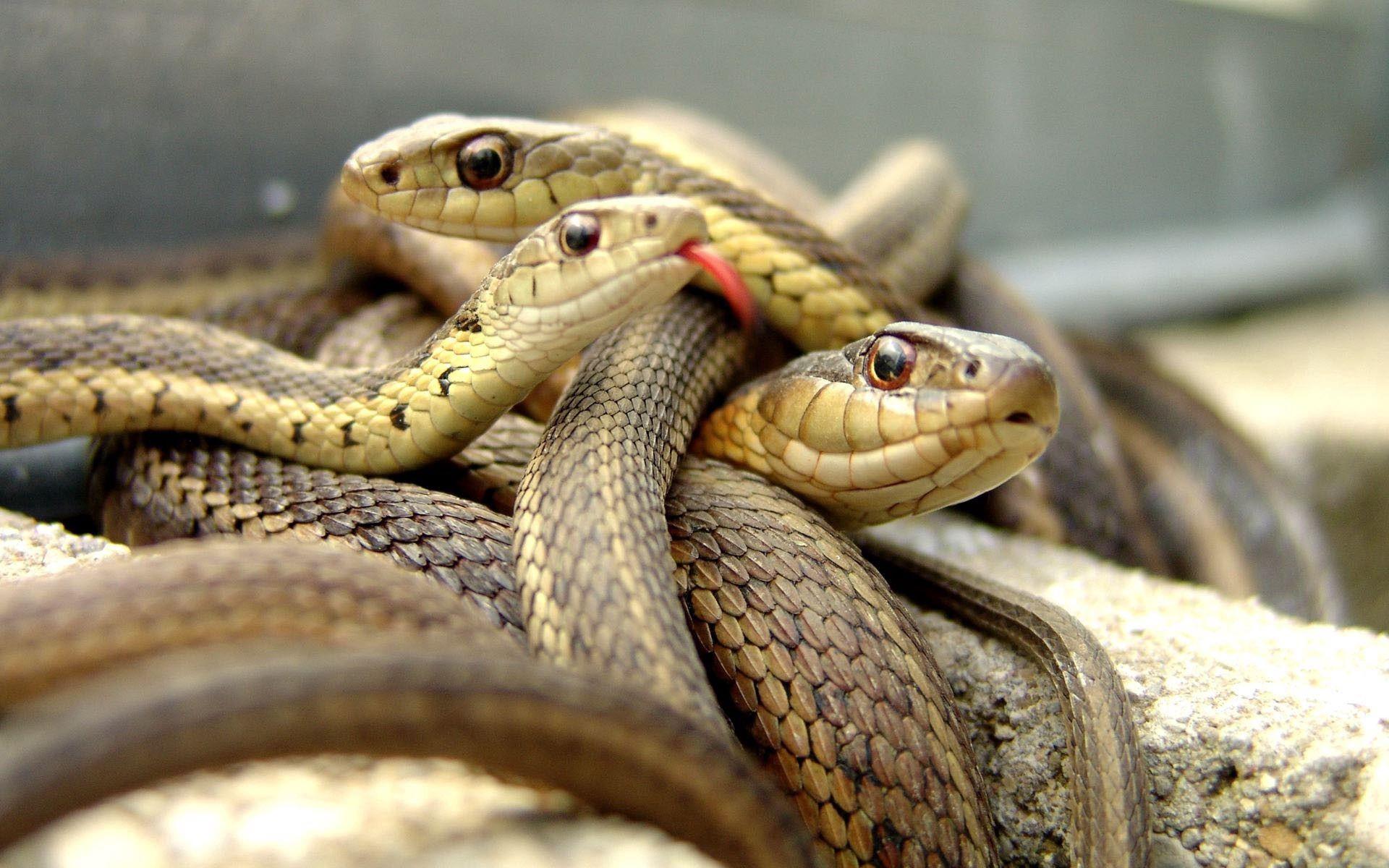 110115 скачать обои Змеи, Животные, Пресмыкающееся, Множество - заставки и картинки бесплатно
