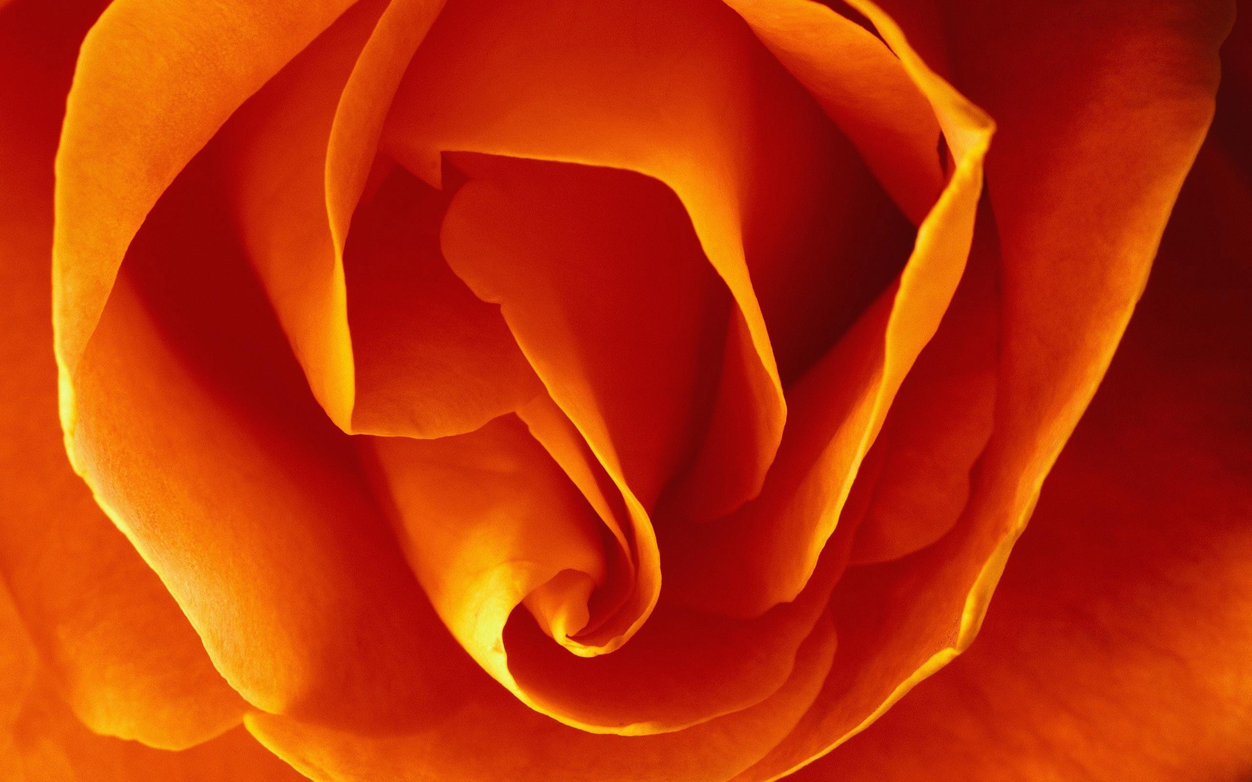 3963 скачать обои Растения, Цветы, Розы - заставки и картинки бесплатно