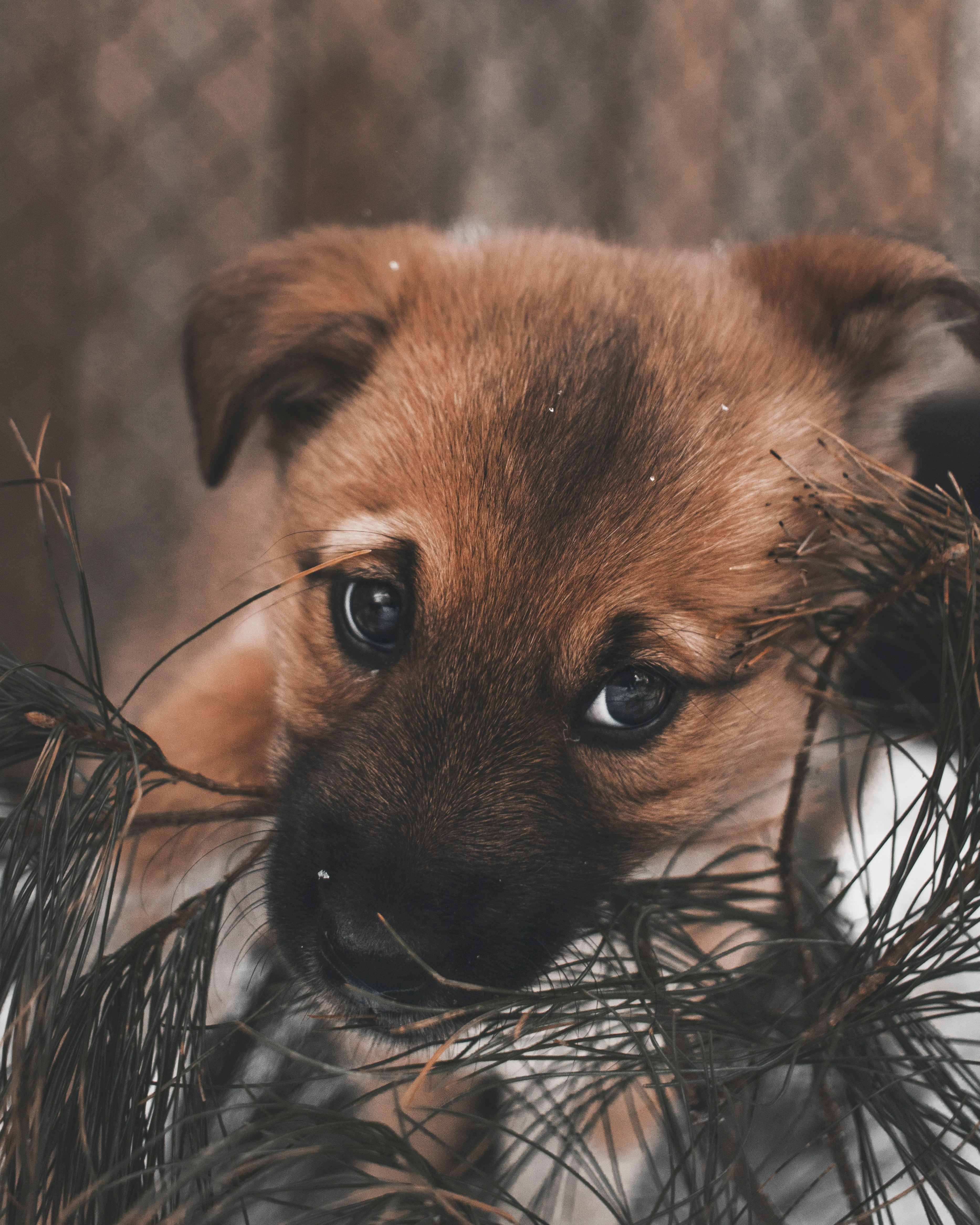 95650 download wallpaper Animals, Dog, Puppy, Nice, Sweetheart, Eyes screensavers and pictures for free