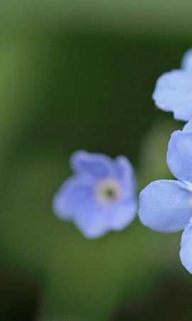 26439 скачать обои Растения, Цветы - заставки и картинки бесплатно