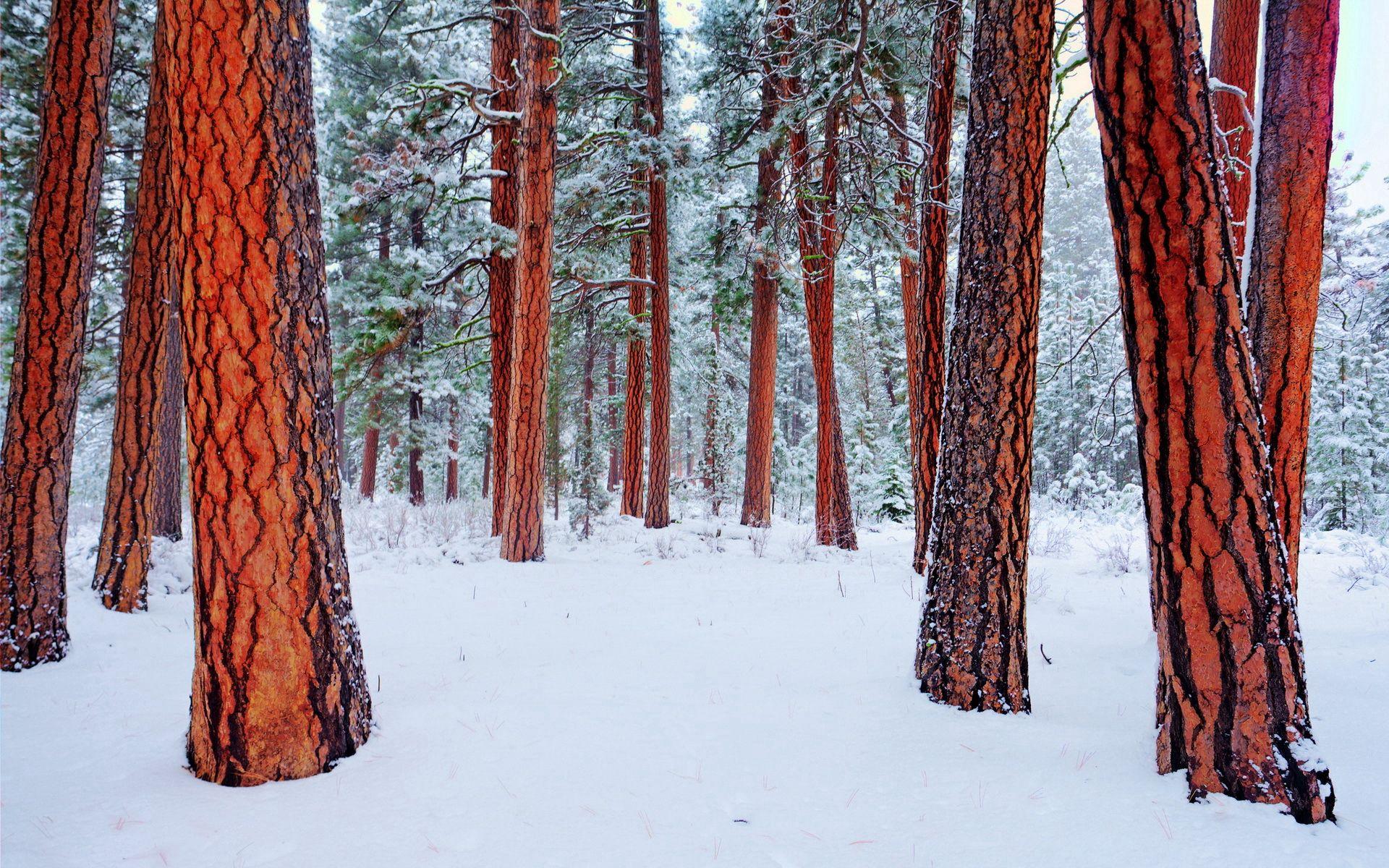 67964 Заставки и Обои Зима на телефон. Скачать Природа, Зима, Деревья картинки бесплатно