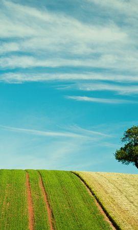 25542 скачать обои Пейзаж, Деревья, Поля, Небо, Облака - заставки и картинки бесплатно