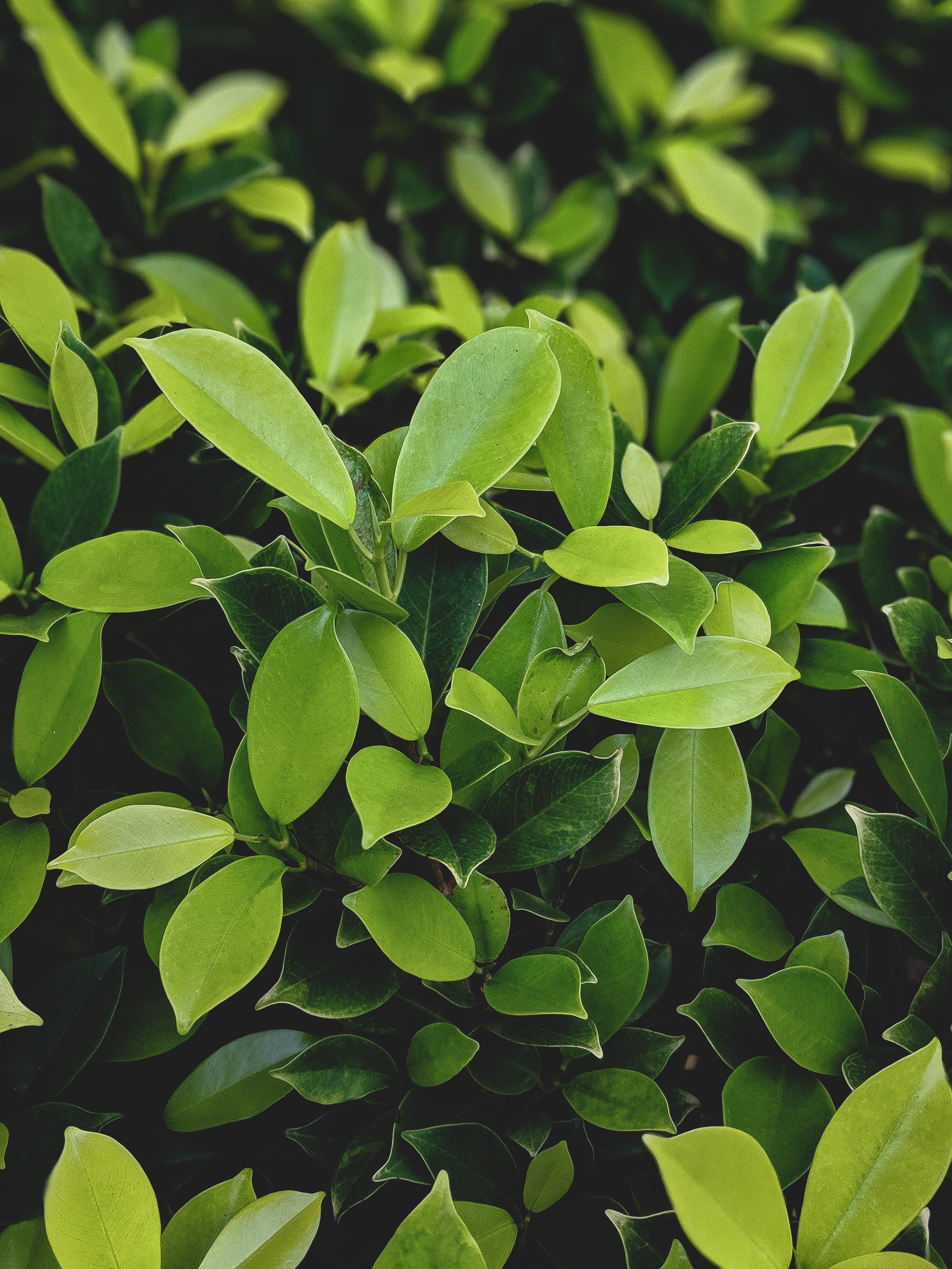 151604 download wallpaper Nature, Leaves, Plant, Branches screensavers and pictures for free