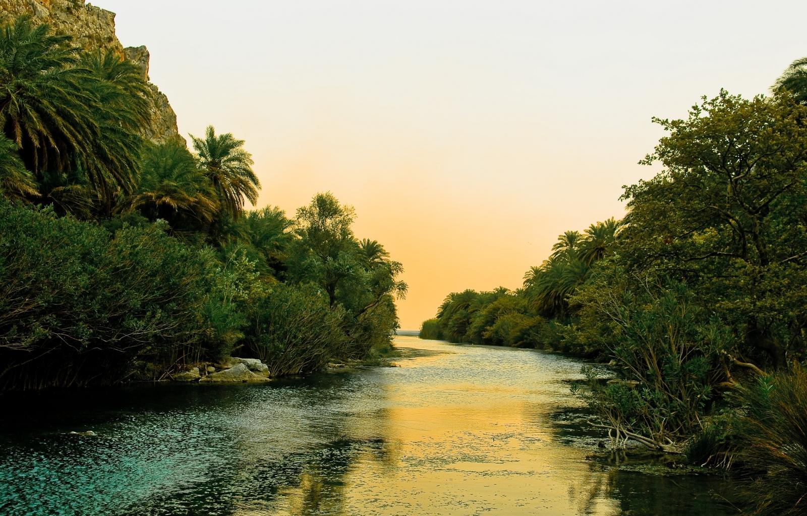 25451 скачать обои Пейзаж, Река, Деревья, Пальмы - заставки и картинки бесплатно
