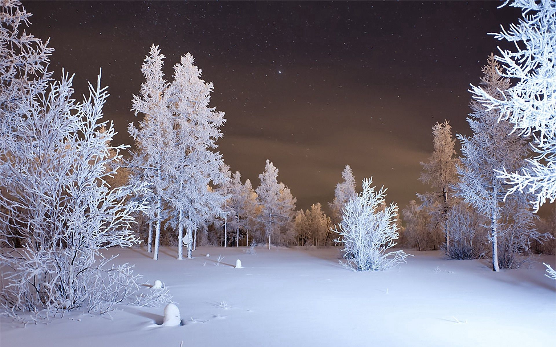 83550 download wallpaper Snow, Winter, Nature, Forest screensavers and pictures for free