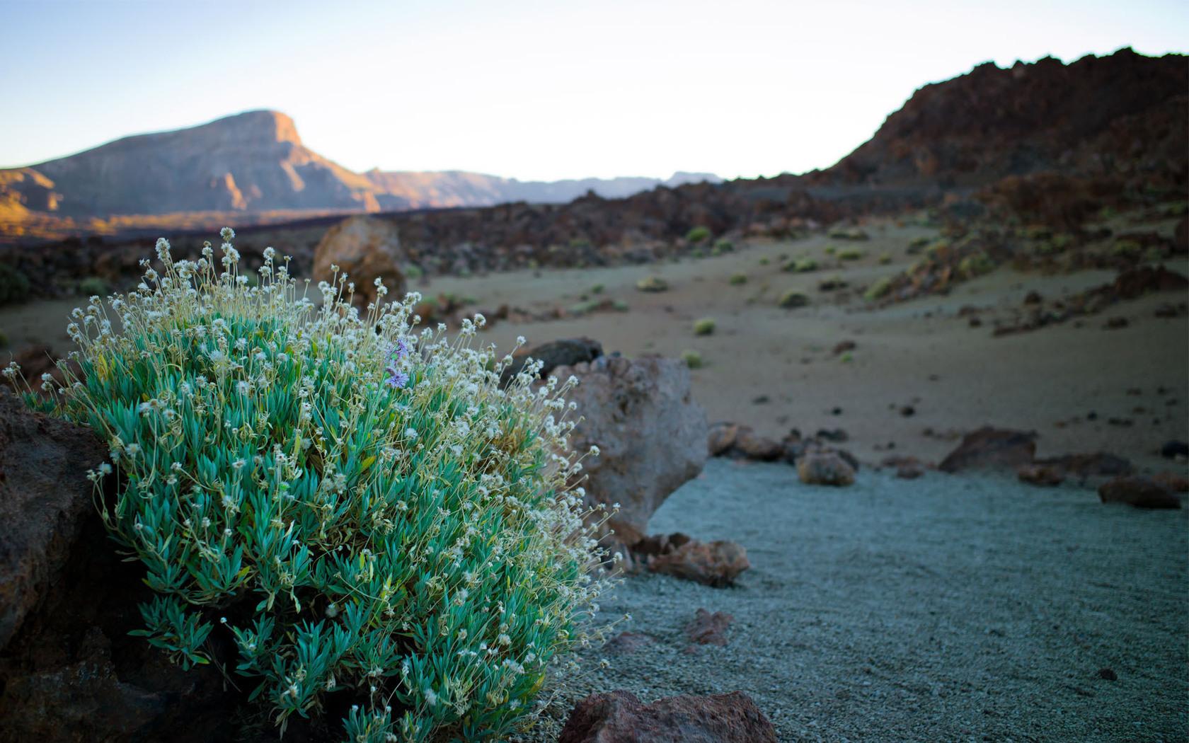 49504 скачать обои Растения, Пейзаж, Природа - заставки и картинки бесплатно