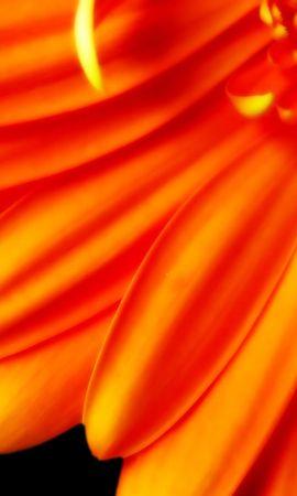 2456 скачать обои Растения, Цветы - заставки и картинки бесплатно