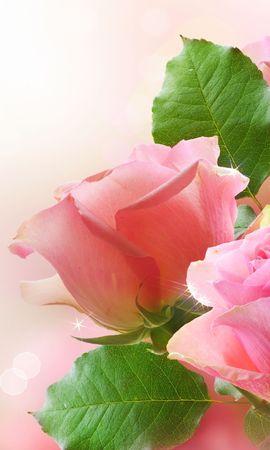 25059 скачать обои Растения, Цветы, Розы - заставки и картинки бесплатно