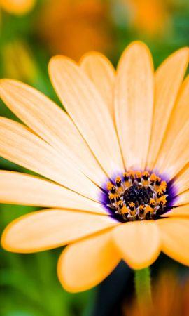 257 скачать обои Растения, Цветы - заставки и картинки бесплатно