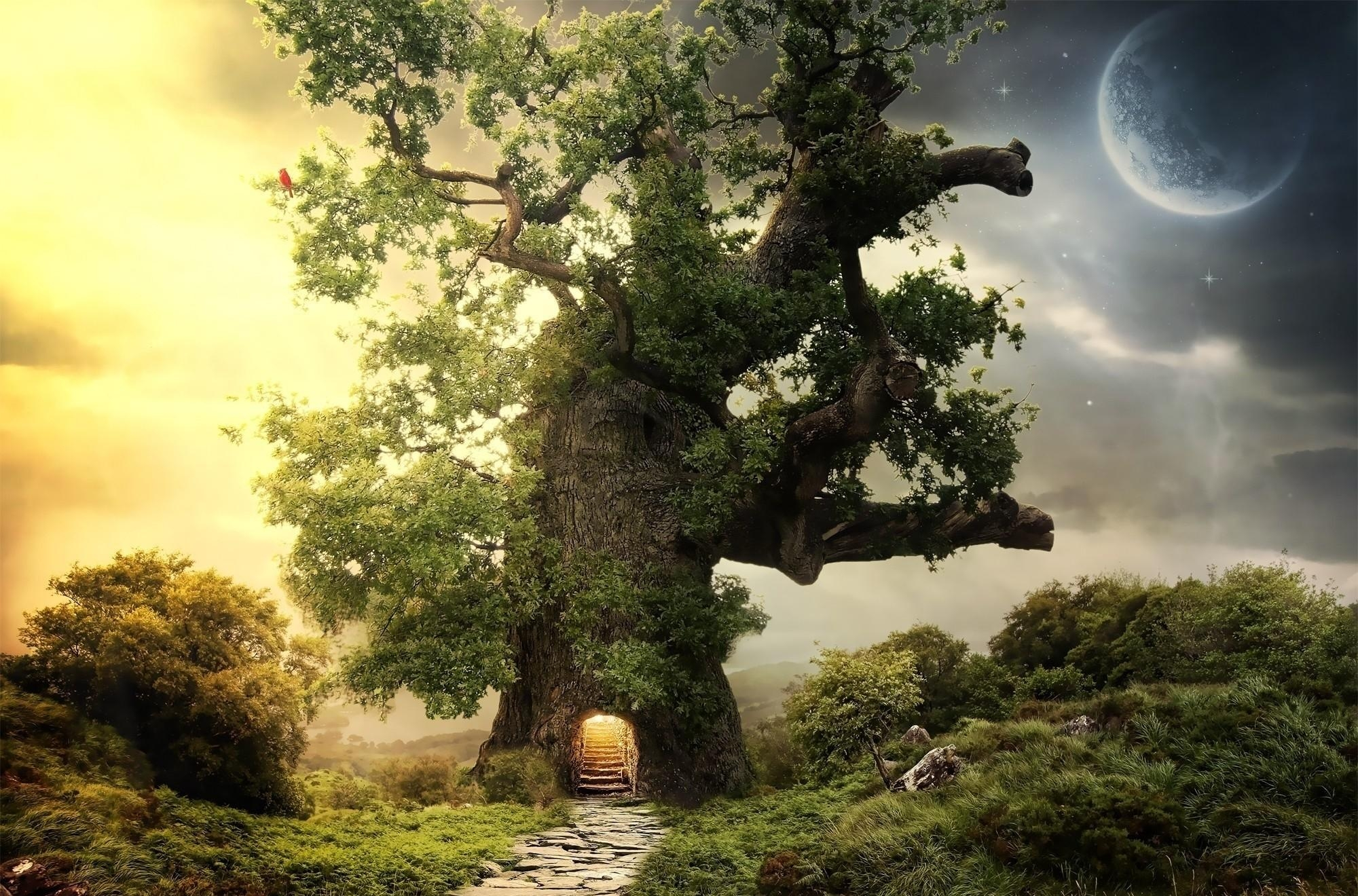 134579 download wallpaper Fantasy, Wood, Tree, Greens, Entrance, Steps, Planet screensavers and pictures for free