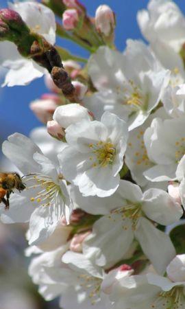 34634 descargar fondo de pantalla Plantas, Flores, Insectos, Abejas: protectores de pantalla e imágenes gratis