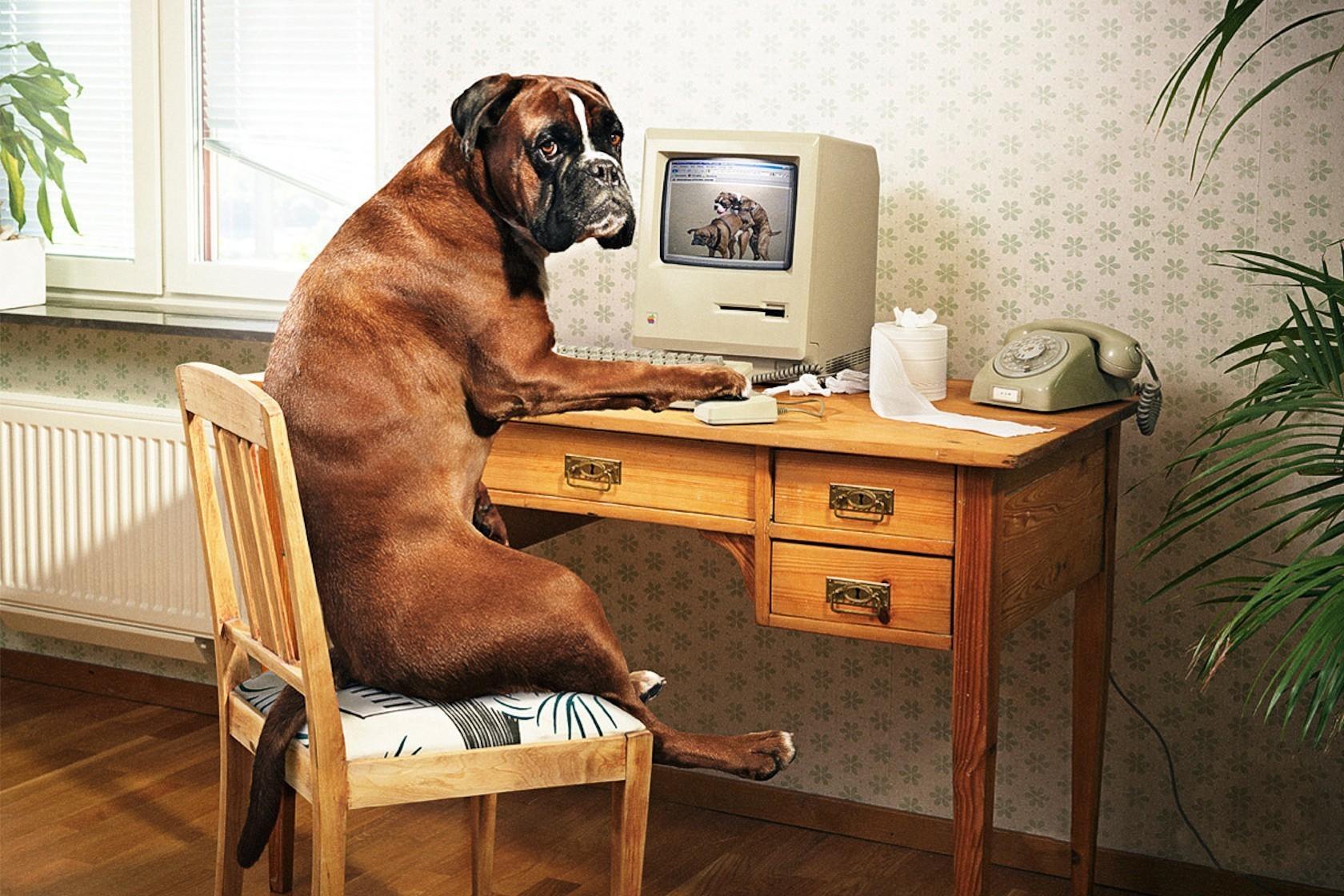 23075 скачать обои Юмор, Животные, Собаки - заставки и картинки бесплатно