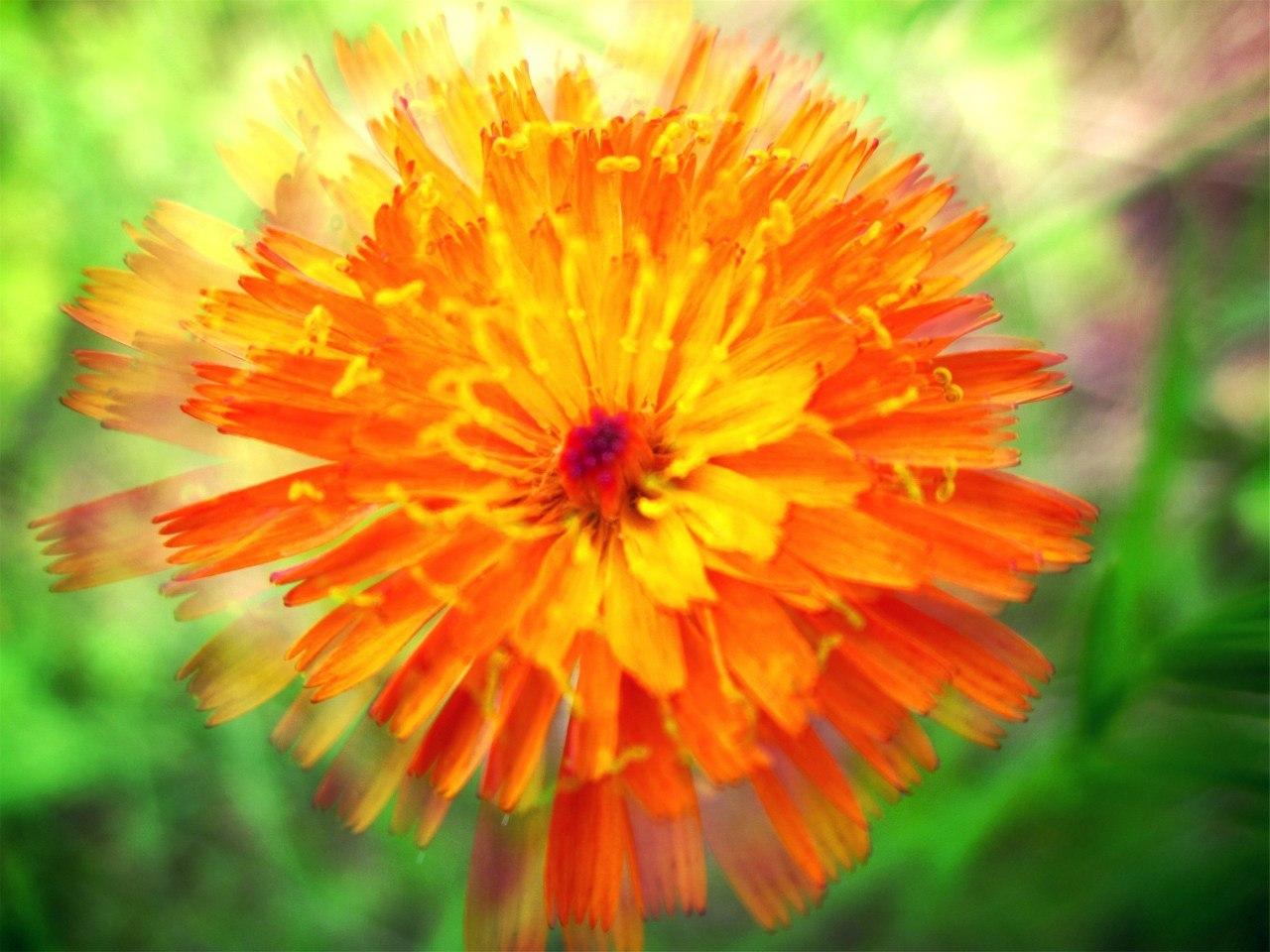 17312 скачать обои Растения, Цветы - заставки и картинки бесплатно