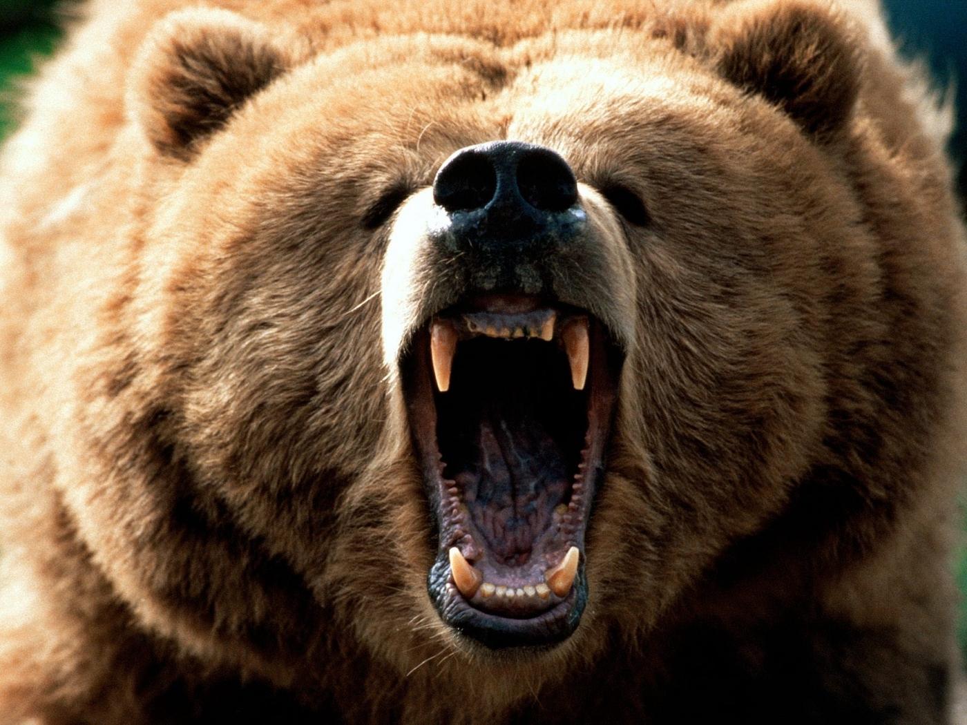 26051 Заставки и Обои Медведи на телефон. Скачать Медведи, Животные картинки бесплатно