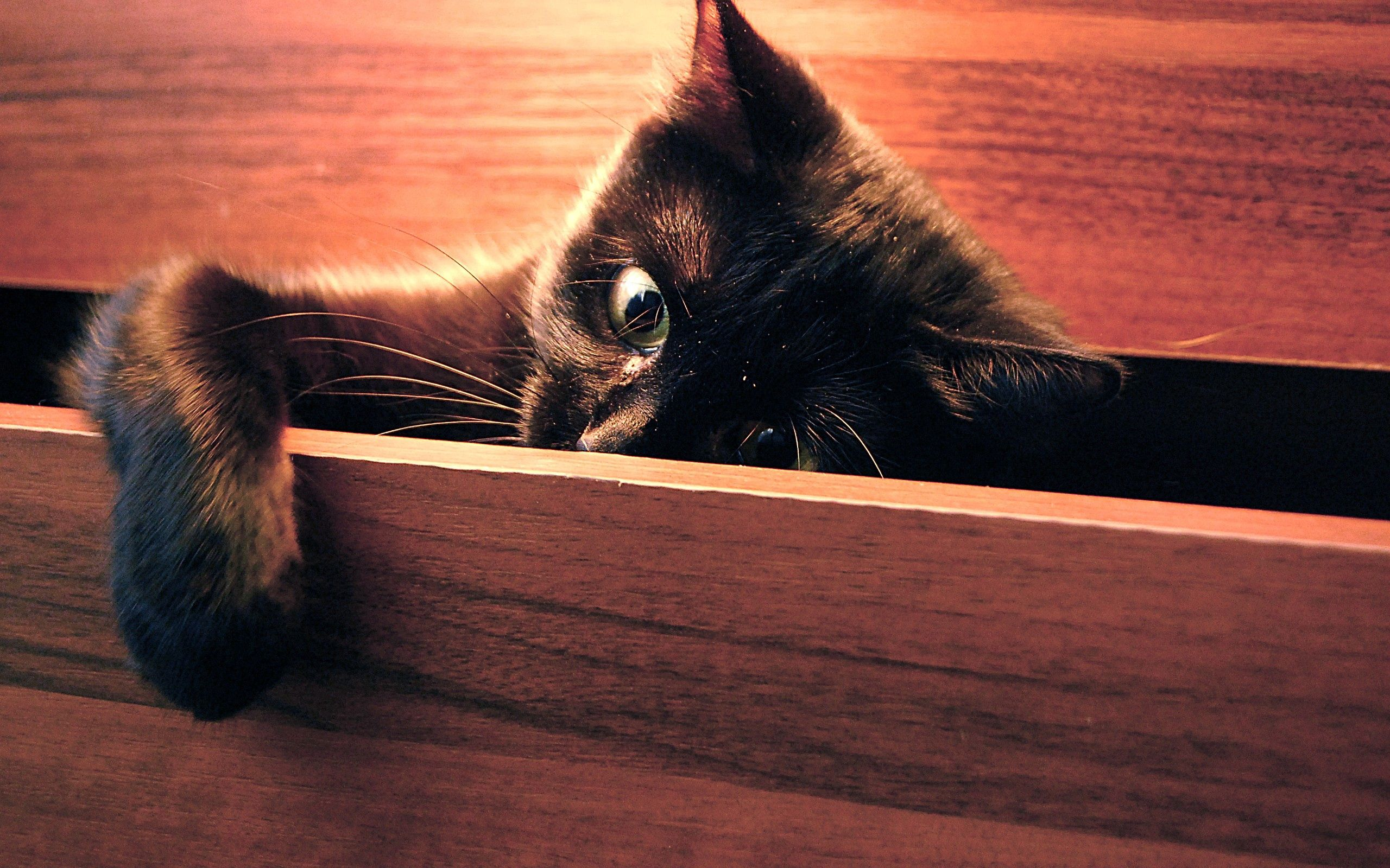 94523 download wallpaper Animals, Cat, Paw, Playful, Peek Out, Look Out screensavers and pictures for free