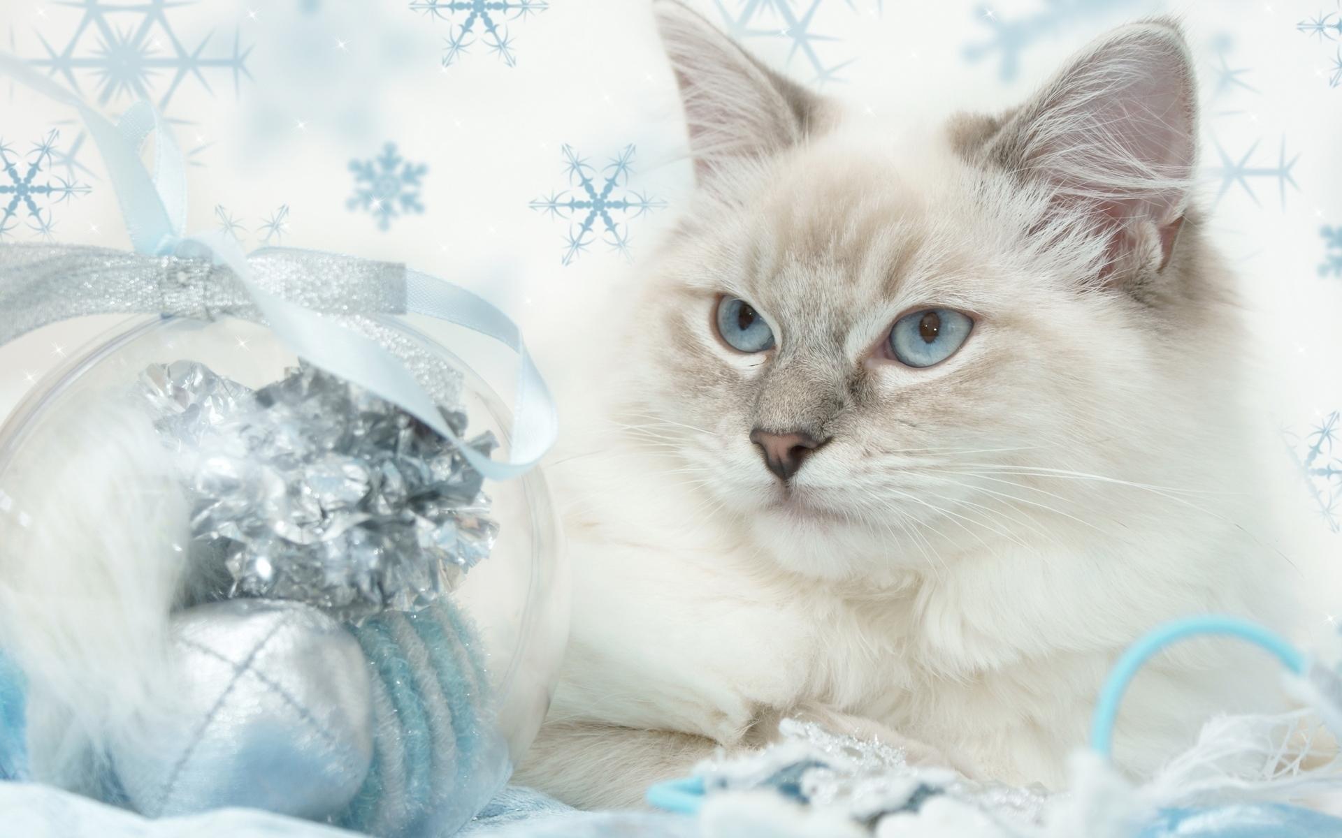 23523 скачать обои Животные, Кошки (Коты, Котики) - заставки и картинки бесплатно