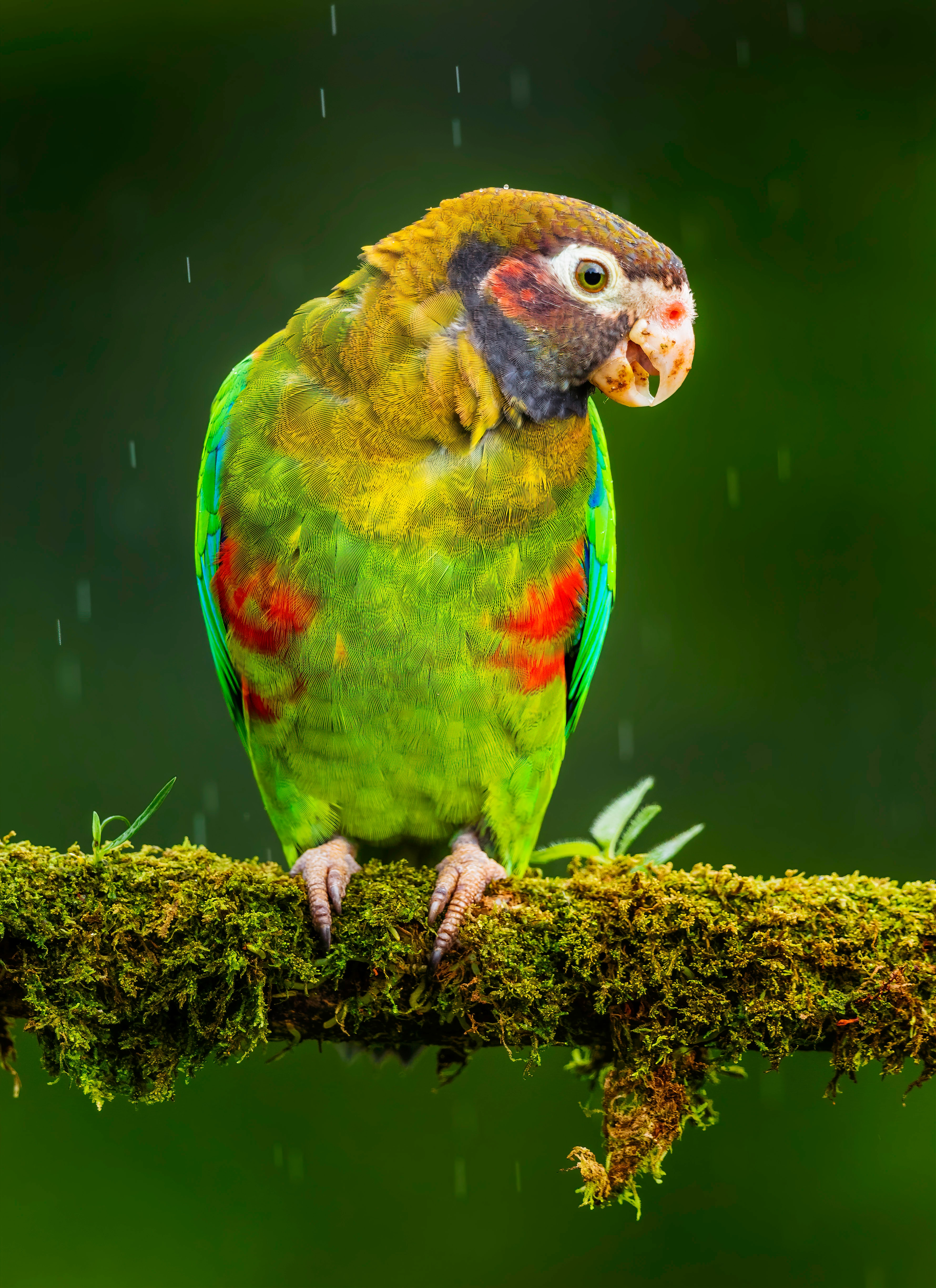 128378 download wallpaper Animals, Macaw, Parrots, Bird, Bright screensavers and pictures for free