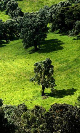 46131 descargar fondo de pantalla Plantas, Paisaje, Árboles: protectores de pantalla e imágenes gratis