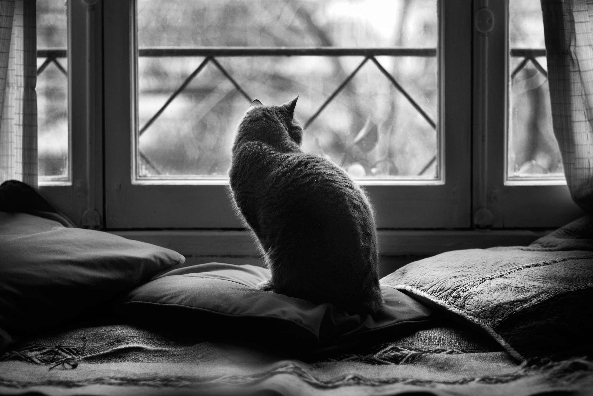 116451 download wallpaper Animals, Dark, Sit, Cat, Cushions, Pillows screensavers and pictures for free