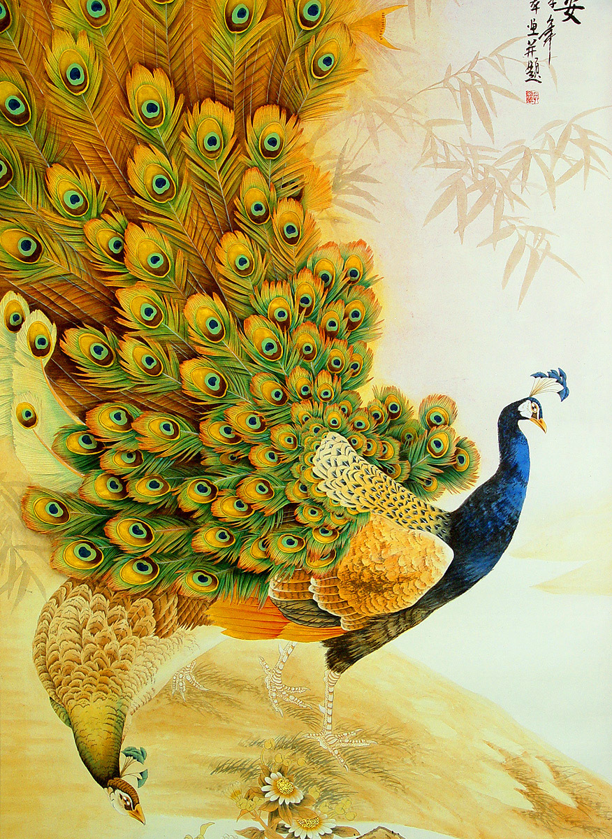9411 Salvapantallas y fondos de pantalla Imágenes en tu teléfono. Descarga imágenes de Animales, Birds, Imágenes, Pavos Reales gratis