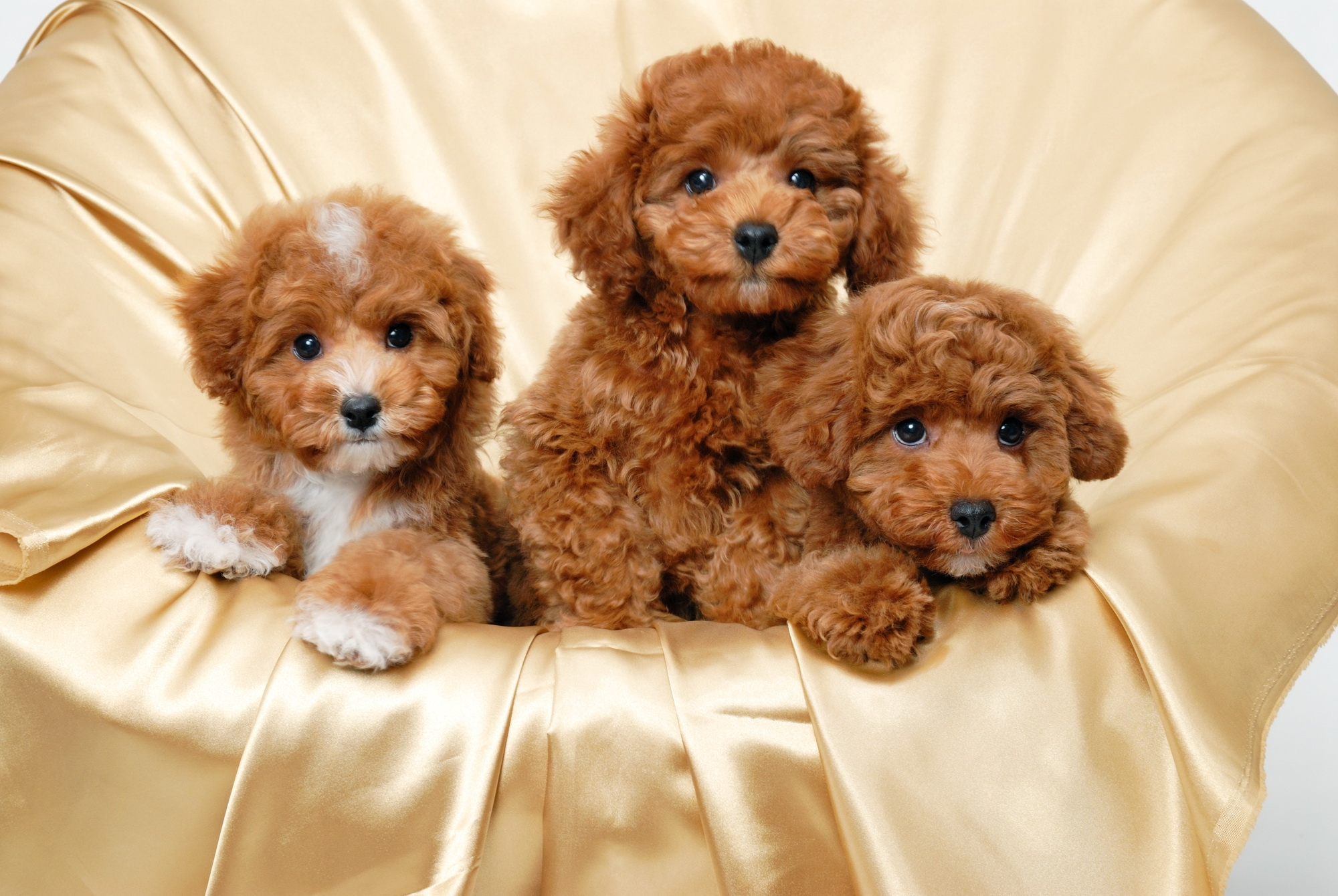 141809 download wallpaper Animals, To Lie Down, Lie, Small, Three, Puppies screensavers and pictures for free
