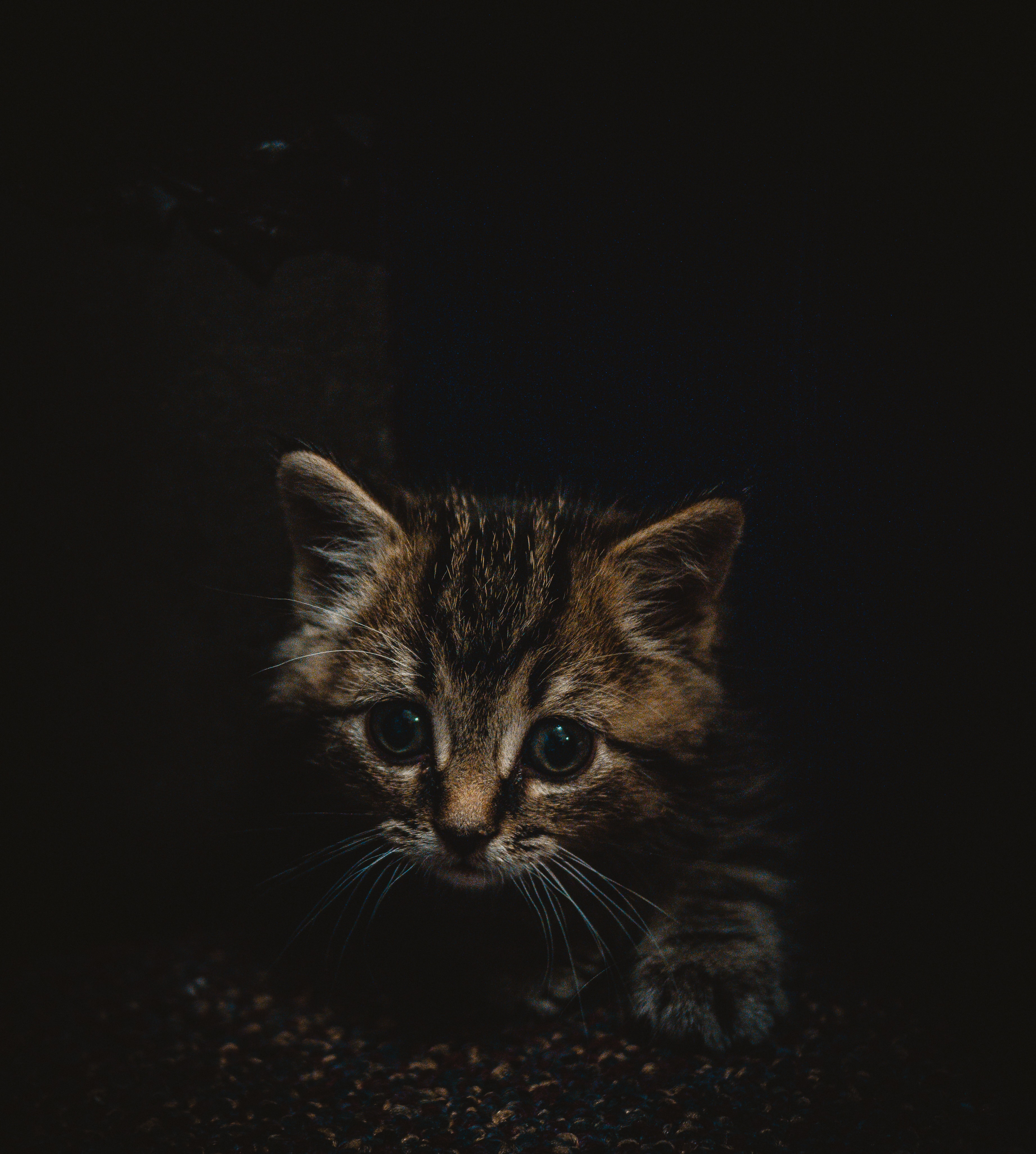 121089 Screensavers and Wallpapers Kitten for phone. Download Animals, Kitty, Kitten, Brown, Pet, Nice, Sweetheart, Small pictures for free