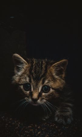 121089 download wallpaper Animals, Kitty, Kitten, Nice, Sweetheart, Small, Brown, Pet screensavers and pictures for free