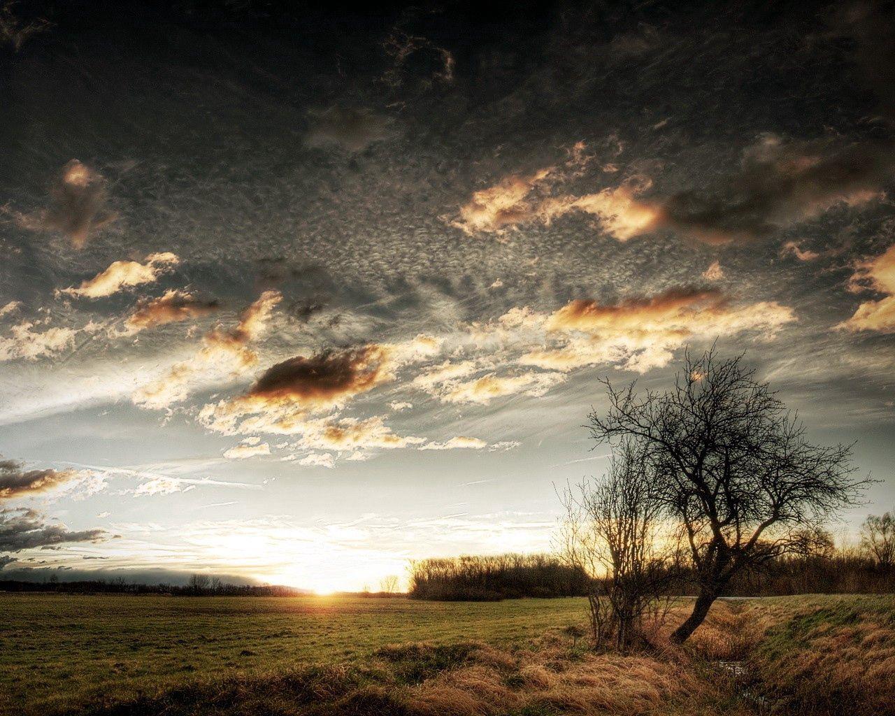 126061 скачать обои Природа, Облака, Небо, Поле, Трава, Дерево, Солнце - заставки и картинки бесплатно