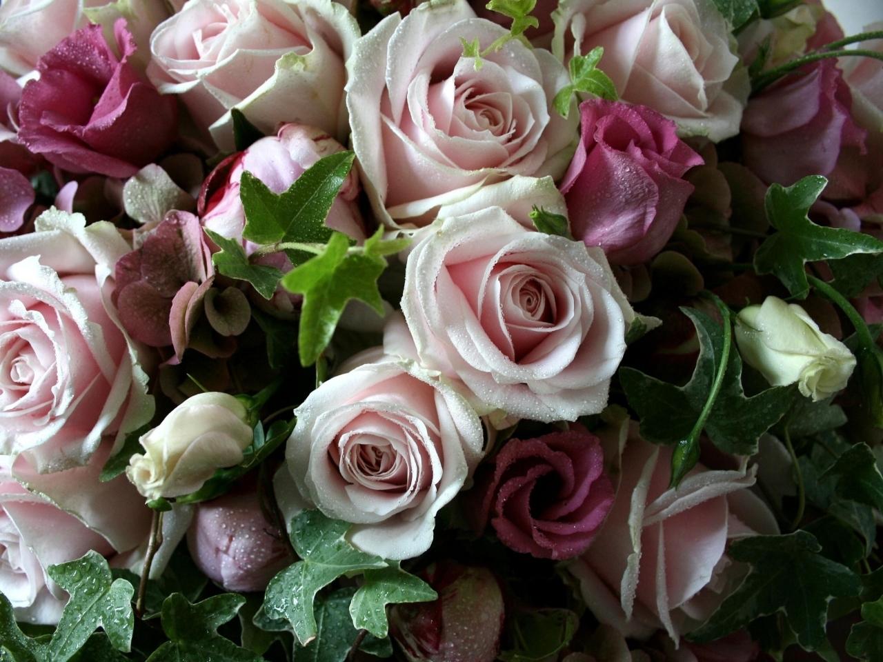 15712 descargar fondo de pantalla Plantas, Flores, Roses: protectores de pantalla e imágenes gratis