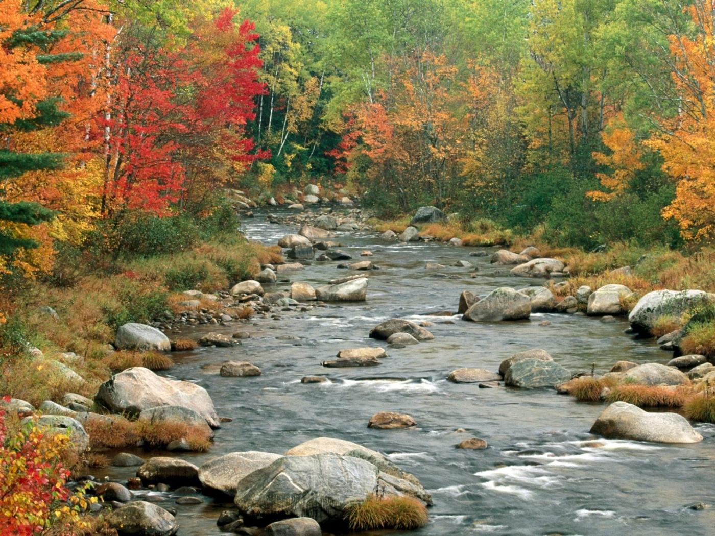 27294 скачать обои Пейзаж, Река, Деревья, Камни - заставки и картинки бесплатно