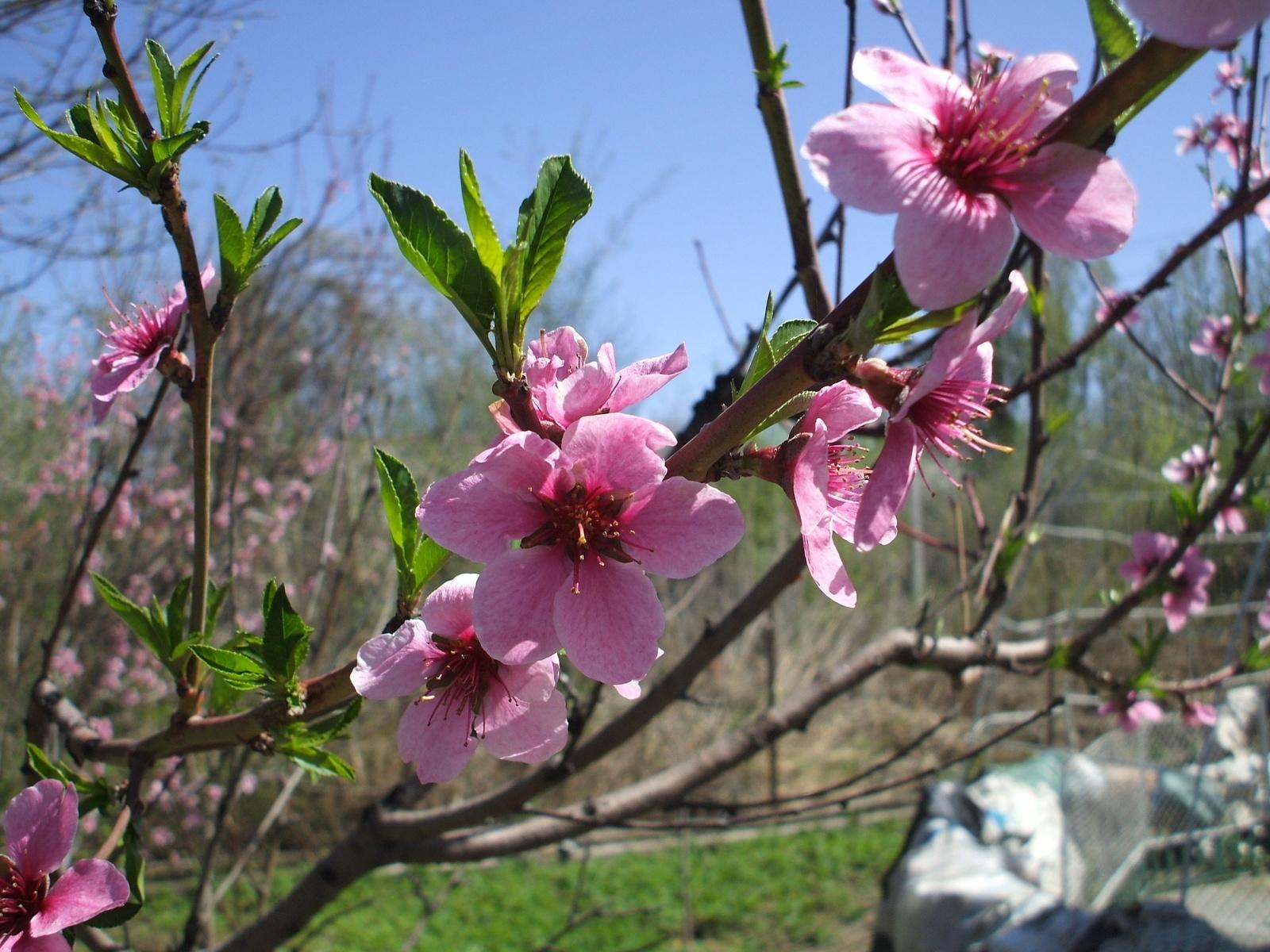 10064 descargar fondo de pantalla Plantas, Flores: protectores de pantalla e imágenes gratis