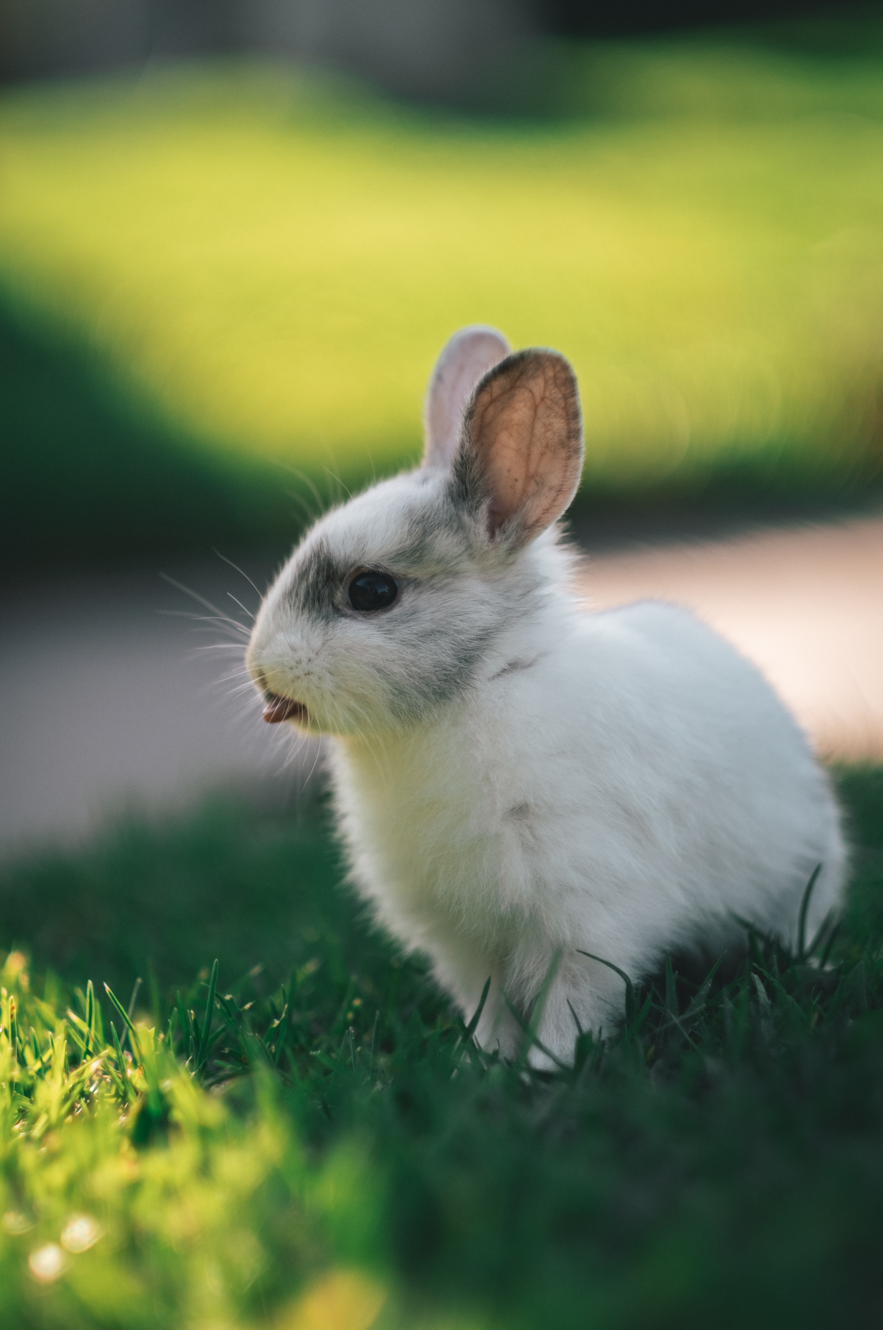 148364 download wallpaper Animals, Rabbit, Hare, Protruding Tongue, Tongue Stuck Out, Funny screensavers and pictures for free