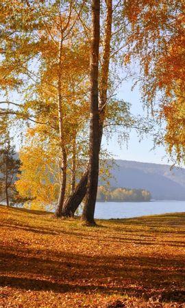 24436 скачать обои Пейзаж, Деревья, Осень, Листья, Березы - заставки и картинки бесплатно