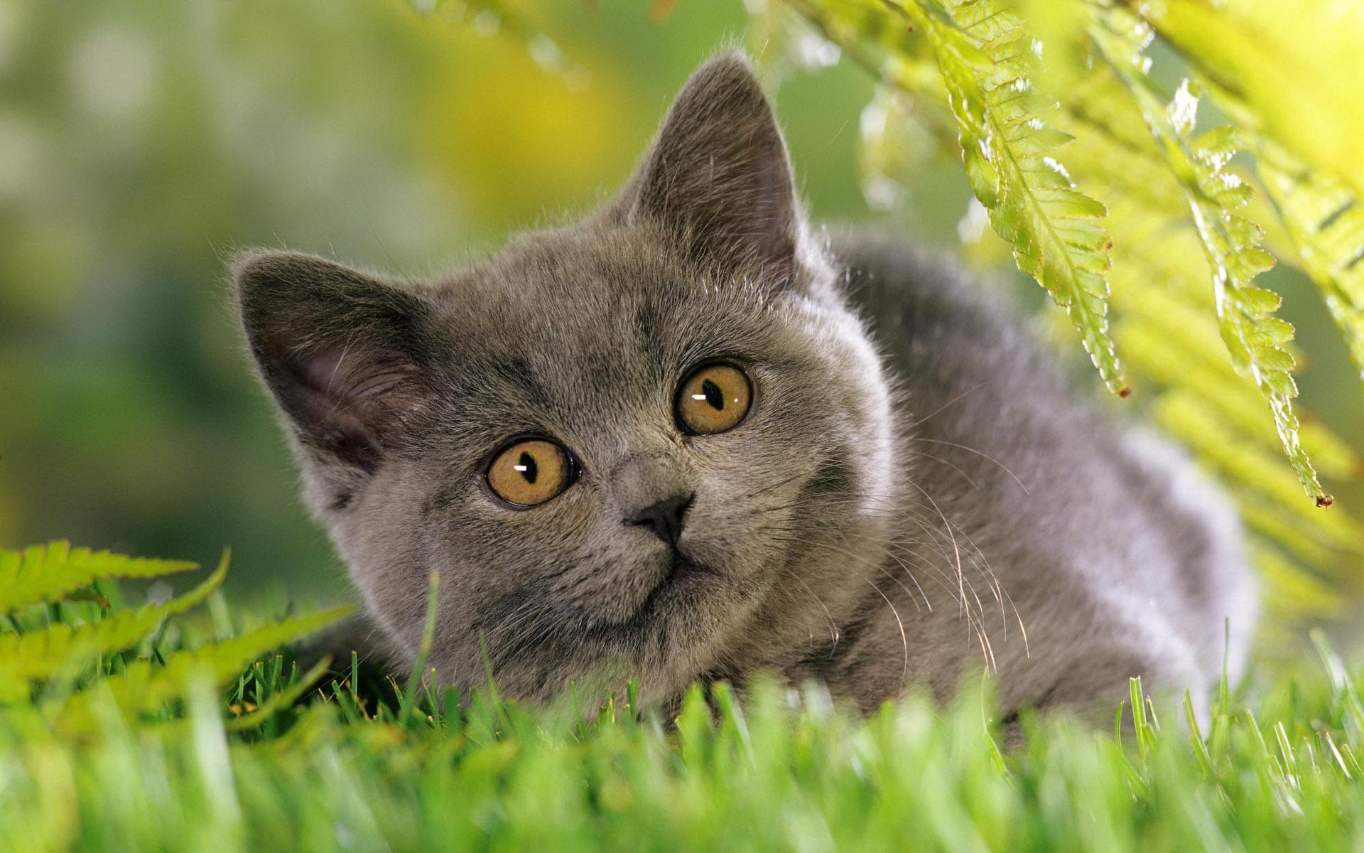 32624 Заставки и Обои Кошки (Коты, Котики) на телефон. Скачать Кошки (Коты, Котики), Животные картинки бесплатно