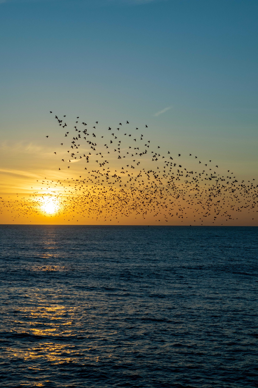 130063 скачать обои Природа, Закат, Море, Стая, Птицы - заставки и картинки бесплатно