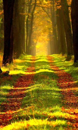 139415 скачать обои Природа, Лес, Осень, Тропинка, Туман - заставки и картинки бесплатно